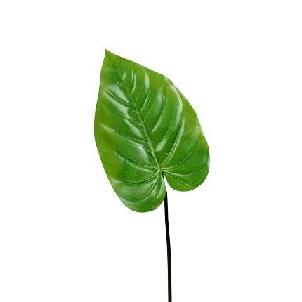 Taro, Blatt, grün