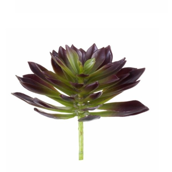 Flora Succulent, 20 cm