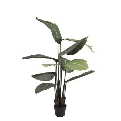 Bananenpflanze, 120 cm