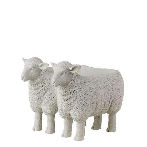 Doppeltes Lamm, weiß