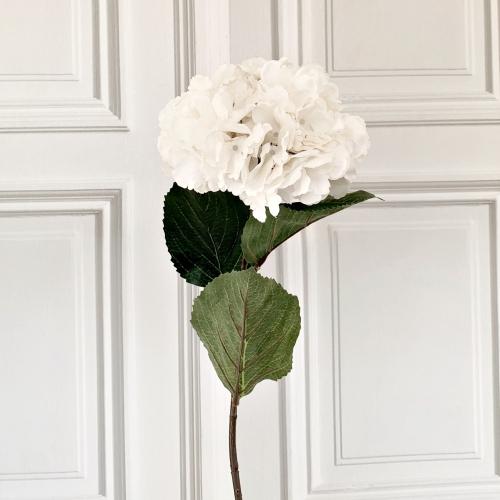 Hortensie, creme-weiß