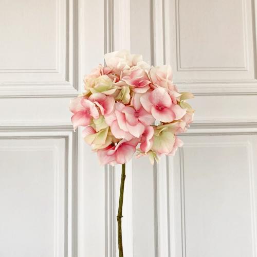 Hortensie, rosa